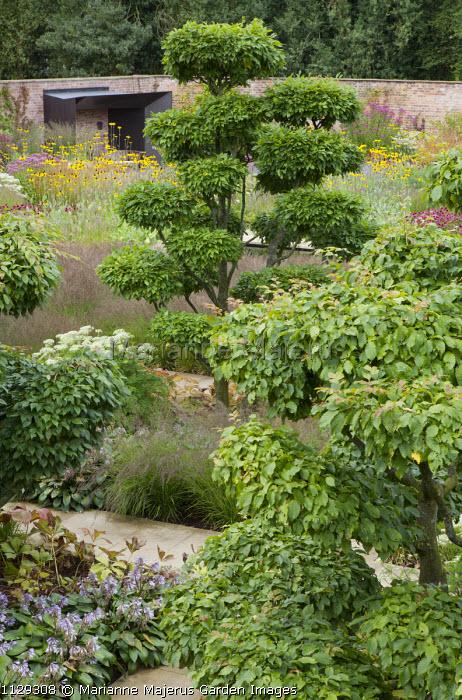 Cloud-pruned Carpinus betulus, walled garden, Molinia caerulea subsp. caerulea 'Poul Petersen', niwaki