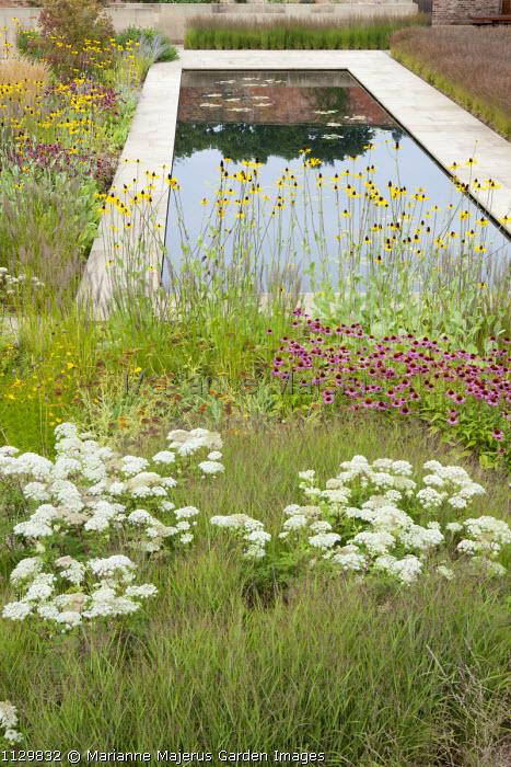 Formal rectangular pool in walled prairie garden, Echinacea purpurea, Rudbeckia maxima, Selinum wallichianum, Cornus kousa, Molinia caerulea subsp. caerulea 'Poul Petersen'