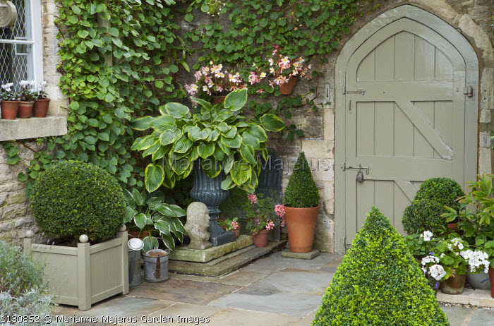 Hosta in classical urn, clipped box shapes in containers, Begonia Waterfall 'Pearl Falls' in wall mounted terracotta pots