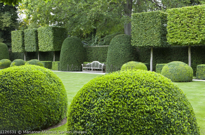 View across formal lawn to wooden Lutyens bench, pleached hornbeams, yew hedge, large box domes