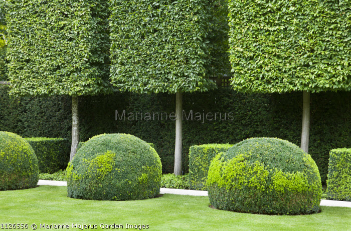 Pleached hornbeams, box domes and cube shapes, yew hedge