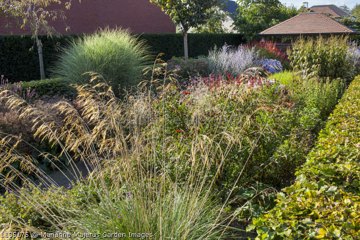 Stipa gigantea, garden room, Veronicastrum 'Fascination', Perovskia atriplicifolia 'Little Spire', Persicaria amplexicaulis 'Fine Pink', Miscanthus sinensis 'Morning Light'