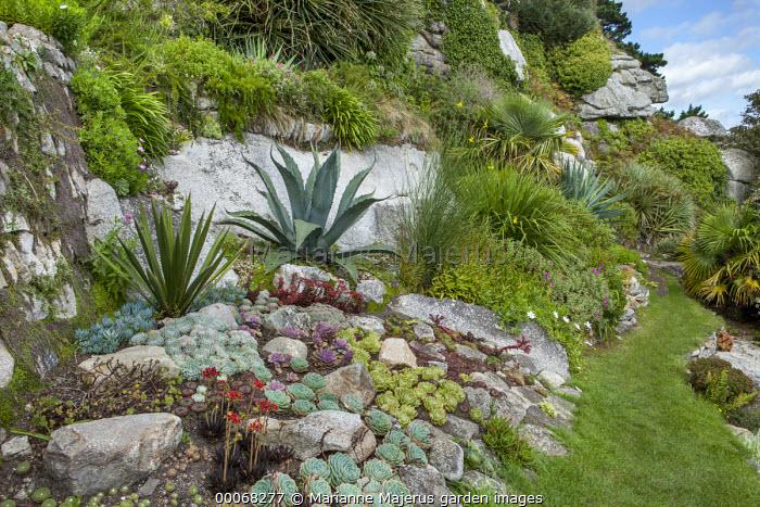 Rock garden, Echeveria affinis, Echeveria elegans, Agave americana