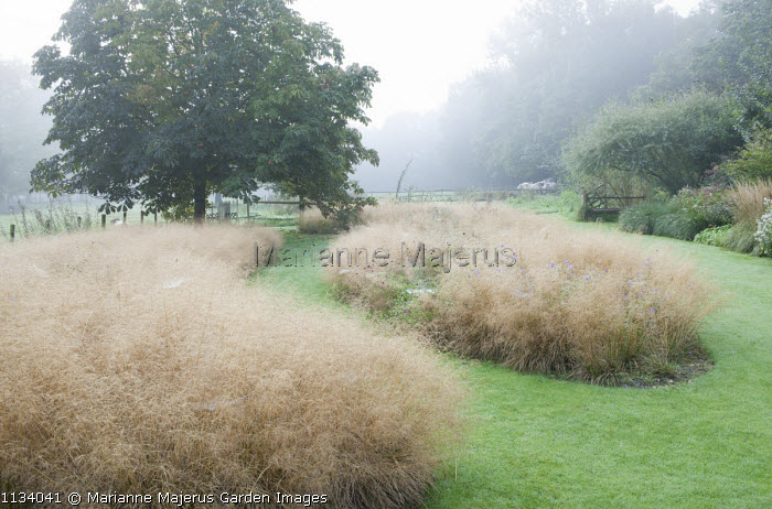 Mown path through drift of Deschampsia cespitosa 'Goldtau'