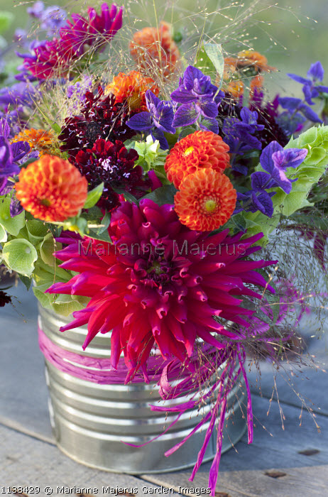 Cut stems of dahlia, Moluccella laevis, Scabiosa atropurpurea, grasses and Salvia viridis in recycled metal tin vase, ribbon, floral arrangement