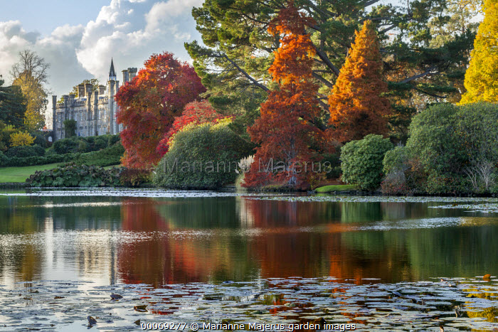 View across lake to Sheffield Park House, Nyssa sylvatica, Taxodium distichum