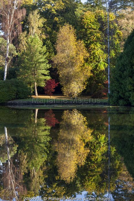View across lake to Betula populifolia, reflections