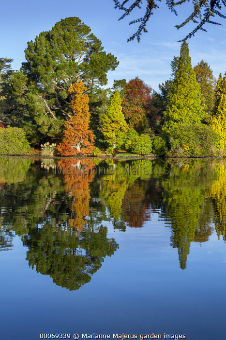 View across lake, reflection of autumn trees in lake, Taxodium distichum