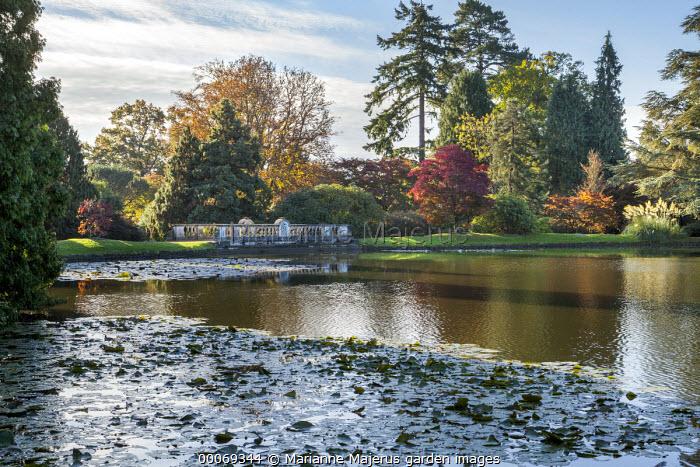 View across lake to Top Bridge, water lilies, Acer palmatum