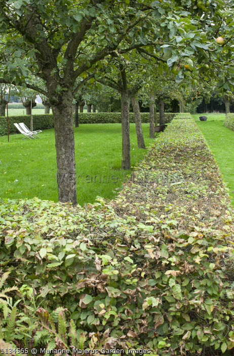 Apple orchard in clipped hornbeam hedge enclosure, deckchairs, garden 'room', pig