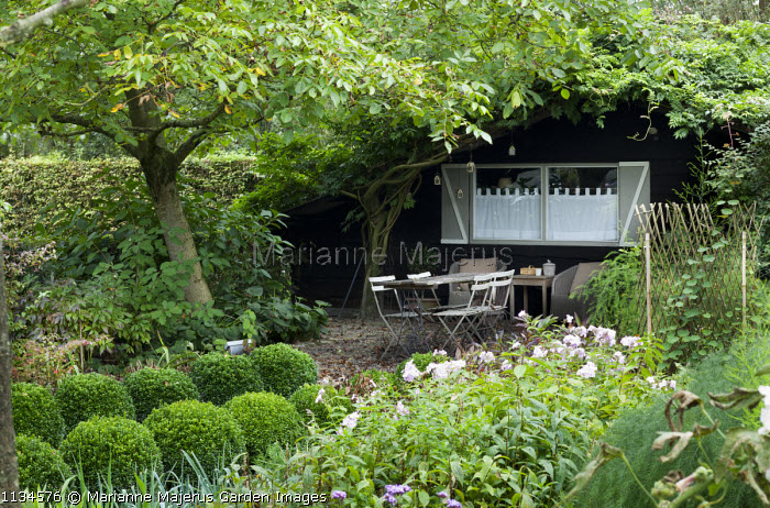 Rustic table and chairs by garden shed under tree, rows of box balls, phlox
