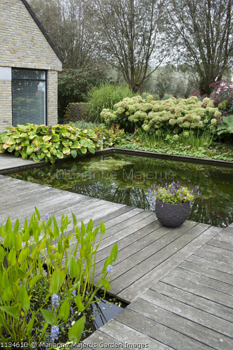 Formal fish ponds surrounded by decking, Hydrangea arborescens 'Annabelle', eupatorium, hosta, Miscanthus sinensis 'Zebrinus'