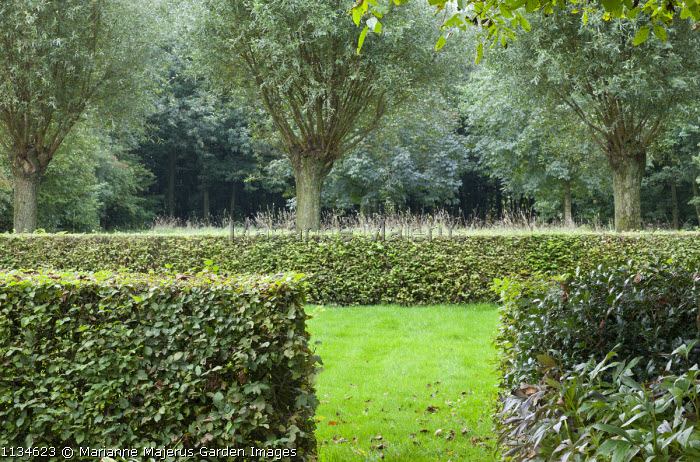 Clipped hornbeam hedge enclosure, pollarded willows, garden 'room'