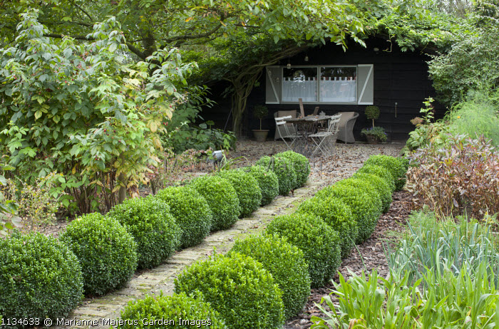 Rows of clipped box balls edging path through kitchen garden leading to rustic table and chairs beneath tree by garden shed, raspberries
