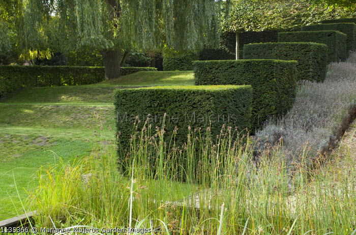 Stepped row of clipped yew cubes in sloping garden, Weeping willow