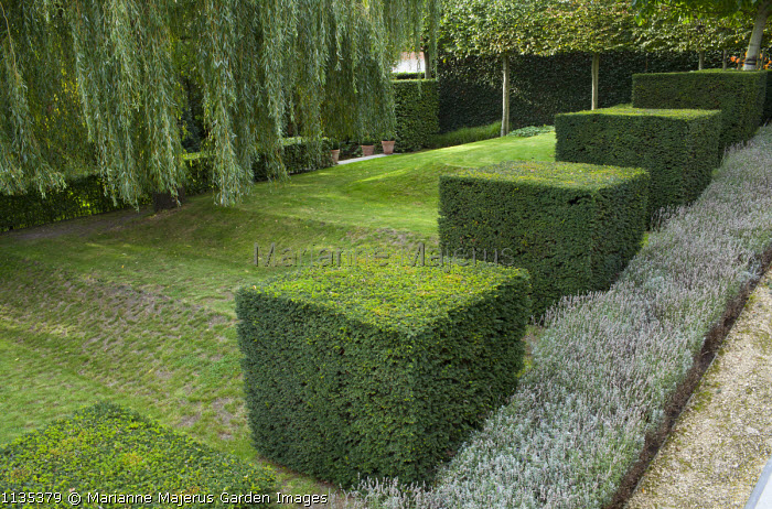 Row of clipped yew cubes in sloping garden, lawn, Weeping willow, lavender