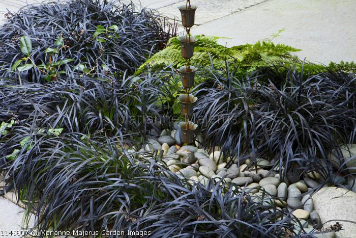 Ophiopogon planiscapus 'Nigrescens', pebbles, Japanese rain drain