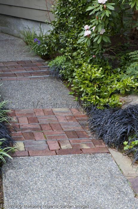 Brick paving in resin-bonded gravel path, Ophiopogon planiscapus 'Nigrescens', rhododendron