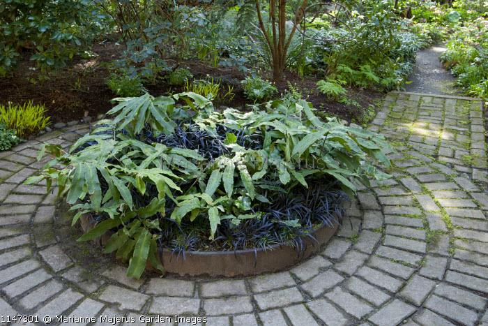 Circular brick paving around circular raised bed, Ophiopogon planiscapus 'Nigrescens'