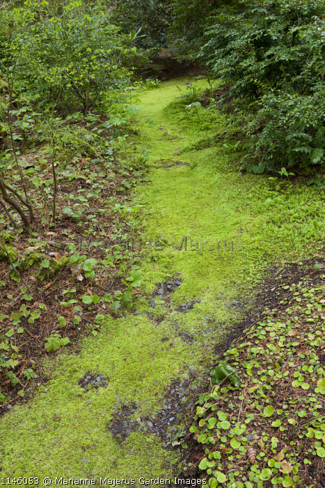 Moss-covered path