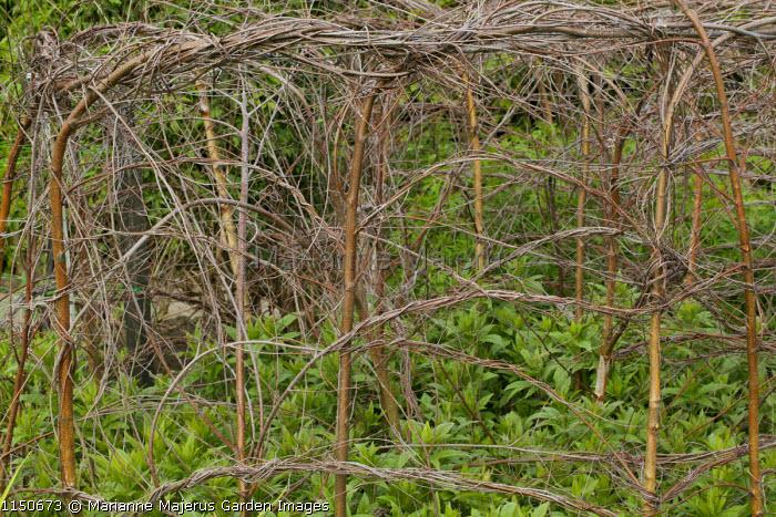 Hazel twig plant support