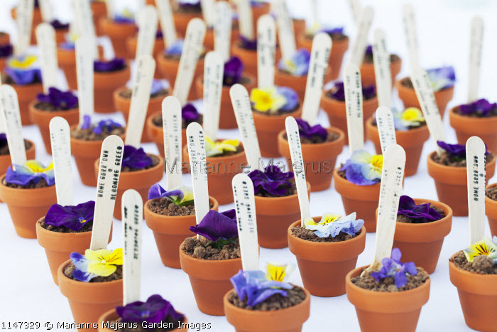 Edible canapés in small terracotta pots, edible flowers