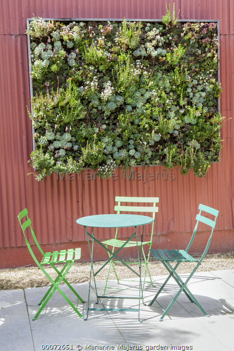 Vertical Succulent Garden, D.I.Y. Panel with sedum and sempervivum, table and chairs, red painted wall