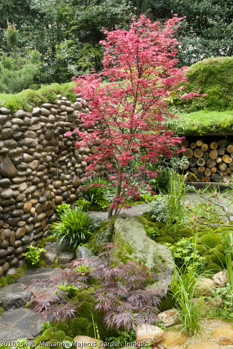 Acer palmatum, pebble wall, log storage, moss mulch, rock