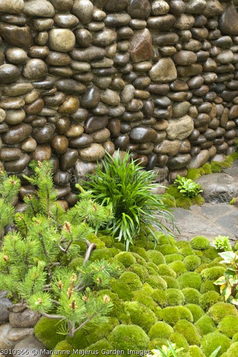Pebble wall, moss, conifer