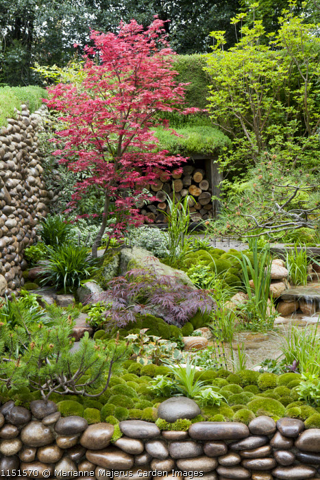 Japanese garden, pebble-edged steps and walls, log storage, pool and waterfall, acer, moss mulch