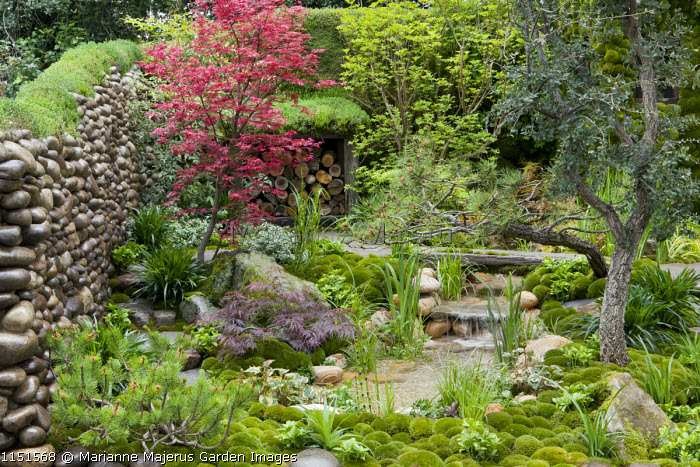 Japanese garden, pebble wall, log storage, pool and waterfall, acer, moss mulch