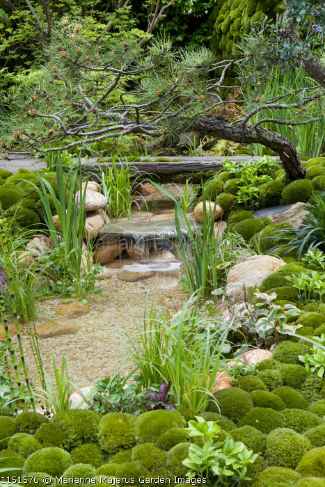 Trained pine tree over water cascade in Japanese moss garden