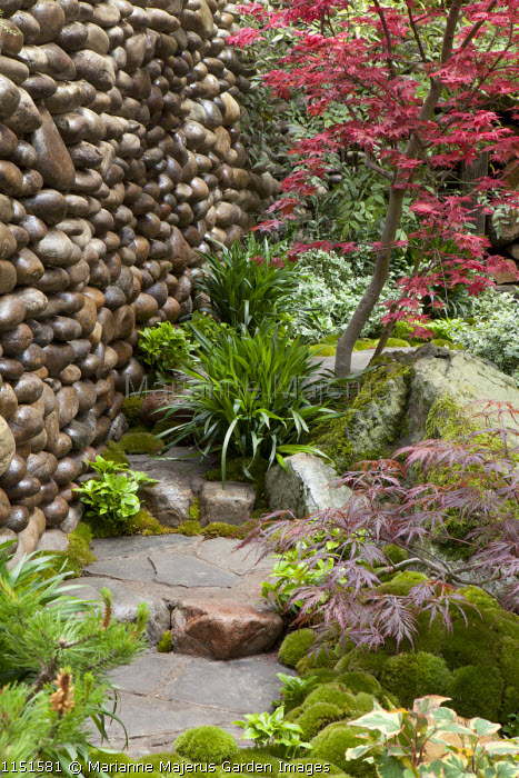 Pebble wall, acers, stepping stone path, moss