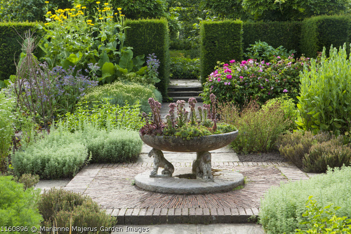 Herb garden, brick paving, sempervivums in large stone trough, roses, Inula helenium