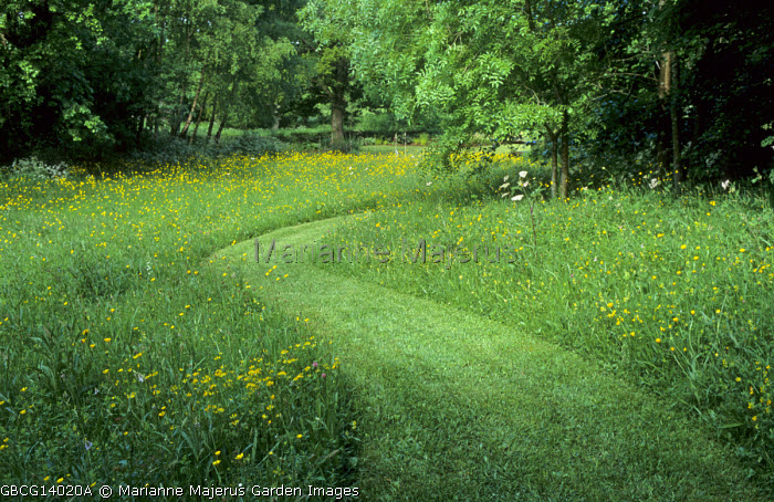 Mown grass path through wildflower meadow