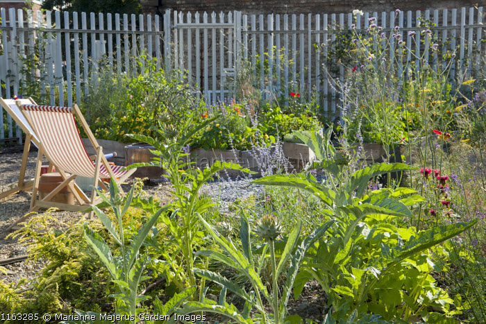 Deckchairs on gravel terrace, Cynara cardunculus, Verbena bonariensis, perovskia, nasturtiums in raised beds