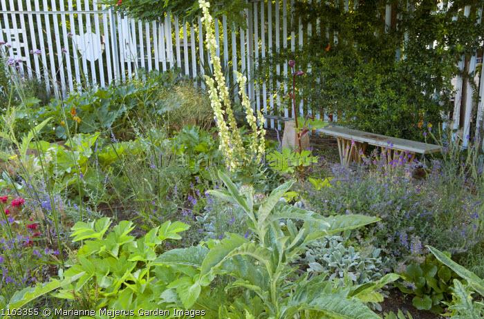 Bench overlooking potager garden, verbascum, Verbena bonariensis, Linaria purpurea, nepeta, courgettes, Angelica gigas