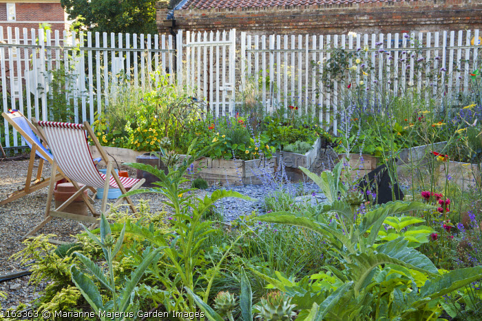 Deckchairs on gravel terrace, wooden raised beds with artichokes, perovskia, fennel