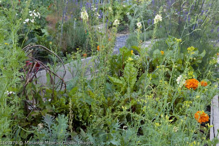 Herb garden, marigolds, fennel, Swiss chard