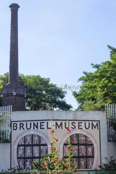 Brunel Museum, hollyhocks