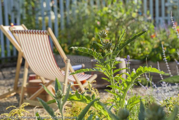 Cynara cardunculus, deck chairs