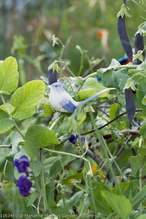 Bird ornament on willow plant support, Pisum sativum 'Shiraz'