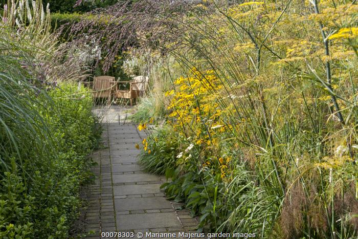 View along path to chairs by Piet Hein Eek, Molinia caerulea subsp. arundinacea 'Windspiel', Foeniculum vulgare, Helenium 'Wesergold', box hedge edging