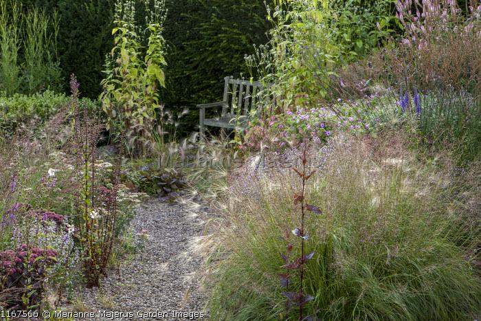 Hordeum jubatum, Atriplex hortensis, chair, Dipsacus pilosus, Sporobolus heterolepis, Molinia caerulea subsp. caerulea 'Poul Petersen', Geranium 'Dilys'