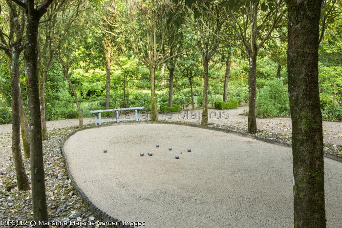 Petanque pitch, boules, Ligustrum lucidum