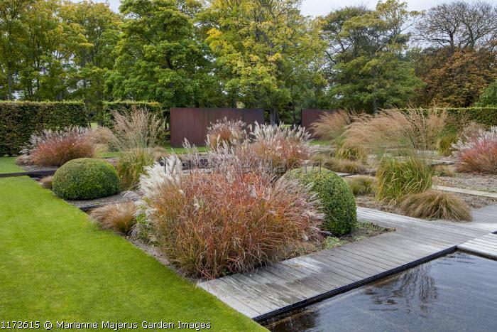 Formal water garden, Miscanthus sinensis 'Ferner Osten', molinia, clipped box domes, Cor-Ten steel panels