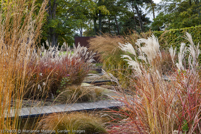 Timber path, formal pools, Miscanthus sinensis 'Ferner Osten', molinia