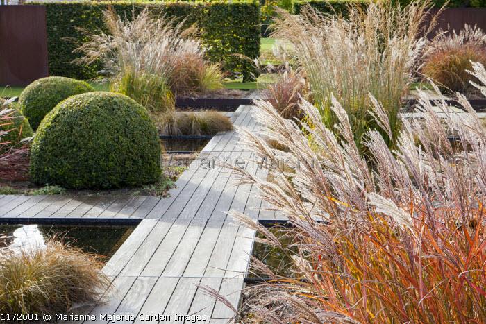 Formal water garden, Miscanthus sinensis 'Ferner Osten', molinia, clipped box domes