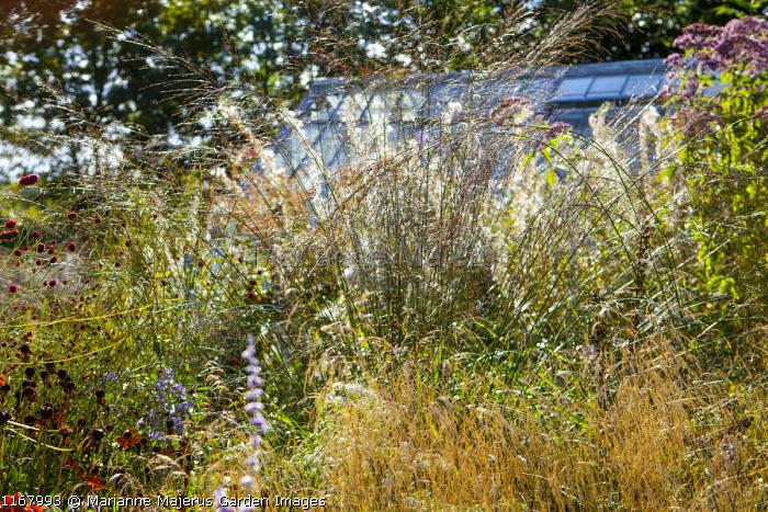 Molinia caerulea subsp. arundinacea 'Windspiel', Sanguisorba officinalis, Chamaenerion angustifolium 'Album' syn. Epilobium angustifolium var. album