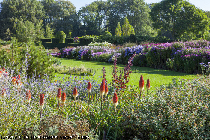 Kniphofia, view across lawn to aster border